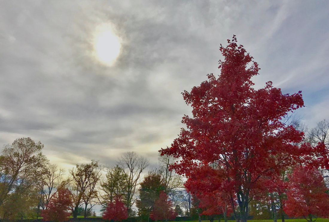 Lexington, Kentucky Autumn Trees and Sky photo by Jenny Leigh Hodgins.