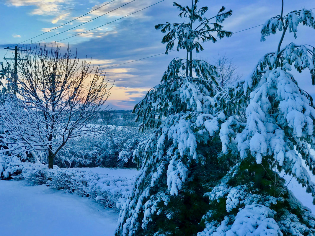 Winter Scene, heavy snowfall over rolling hills, snowy evergreen tree branches, soft-hued sunrise with pastel colors in Lexington, Kentucky. Photo by Jenny Leigh Hodgins