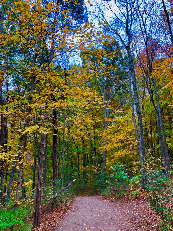 Photo of Bernheim Forest © 2019 by Jenny Leigh Hodgins. Beautiful fall changing colors. How does facing your fear help you?