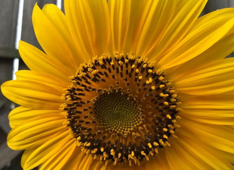 sunflower hope strength resilience creative. strategies to empower. YourCreativeChord.com Jenny Leigh Hodgins