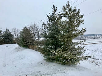 Kentucky Winter Snow scene with evergreen trees. Nature is an effective self-care strategy. Photo by JL Hodgins